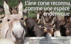 L'âne corse reconnu comme une espèce endémique
