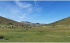 Au plateau du Coscionu : reconquête pastorale et préservation de la biodiversité