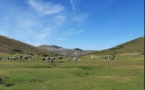 ALTA ROCCA   Préservation de la biodiversité sur le plateau du Cuscionu