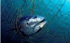 Corse : des pêcheurs italiens interpellés alors qu'ils braconnaient dans la réserve de Bonifacio