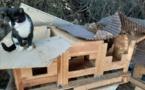 Cinq chats retrouvés morts empoisonnés à Moorea