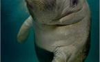 En 50 ans, la faune sauvage s'est appauvrie de plus de moitié