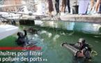 EXPÉRIMENTATION À BASTIA  Des huîtres pour filtrer l'eau polluée des ports