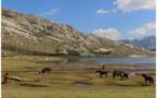 Les chevaux du lac de Ninu