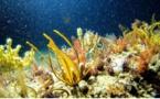 14 millions de tonnes de microplastiques jonchent les fonds marins, d'après une étude australienne