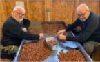 COSTA VERDE  Bella stagione per a nuciola di Cervioni