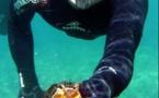 Pêche aux oursins : le début de saison s'annonce difficile