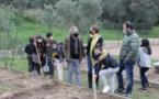 FIGARI  Les écoliers bêchent leur jardin pédagogique en permaculture
