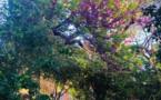 Un kaléidoscope de couleurs au jardin Romieu