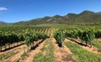 Face à la sécheresse les agriculteurs de Haute-Corse réduisent leur consommation d'eau