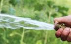 """Usage de l'eau en Plaine Orientale : le """"non"""" des producteurs de fourrage, céréaliers, maraichers et de l'interprofession laitière"""