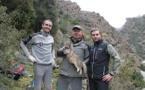 Le chat-renard de Corse s'invite au Congrès Mondial de la Nature