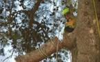 Bastia : Marion Raul au cœur des arbres