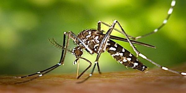 Suspicion d'un cas de Dengue, Zika, ou Chikungunya en Corse-du-Sud
