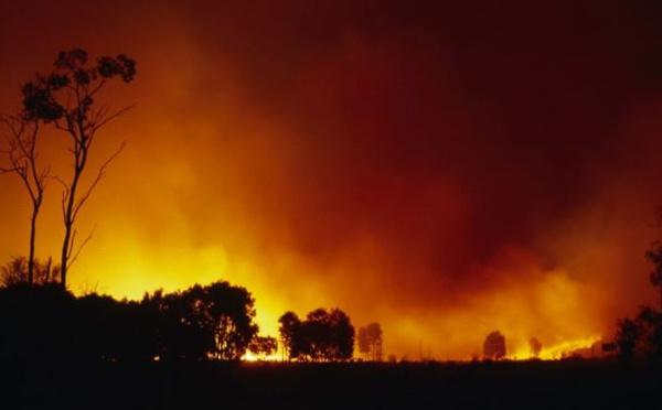 Méga-feux en Australie : est-ce possible en Corse ?