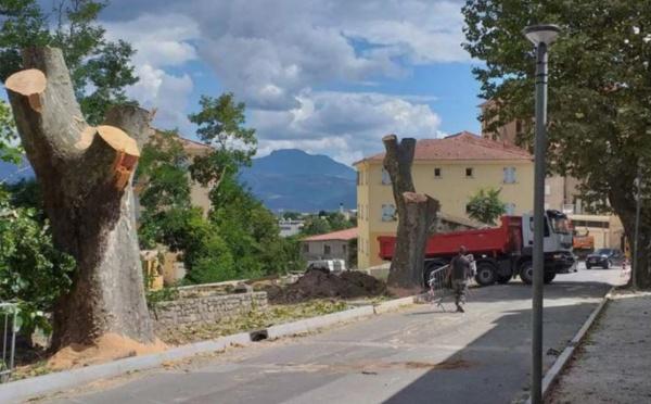 CORTI  Avenue Jean-Nicoli : deux platanes en moins